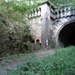 Station12_fern